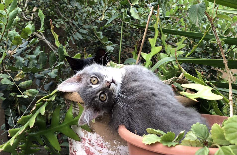lenguaje-corporal-gatos