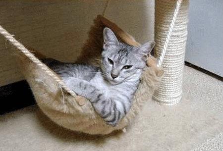 gato enfadado con su nueva cama