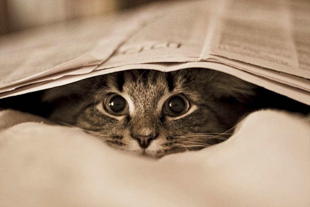 porque-se-esconde-gato