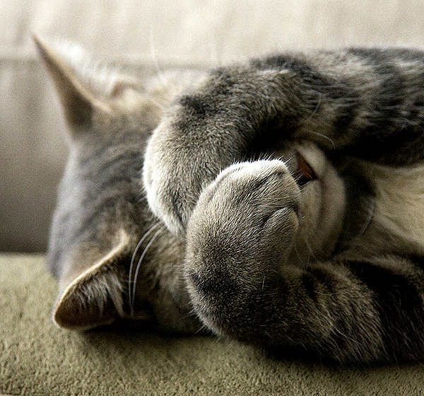 gatito-tímido