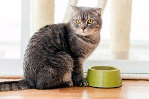 por que mi gato no quiere comer