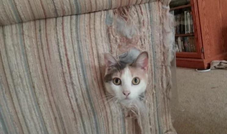 gato destrozando muebles