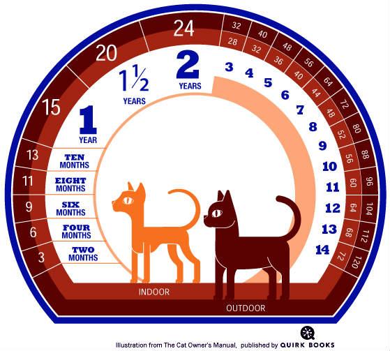 equivalencia años de un gato y años humanos
