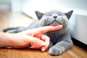acariciar barbilla gato