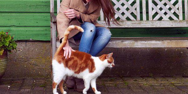 donde-acariciar-gato