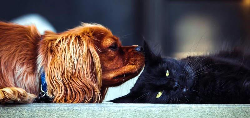 perros y gatos amigos