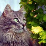 antibióticos naturales para gatos