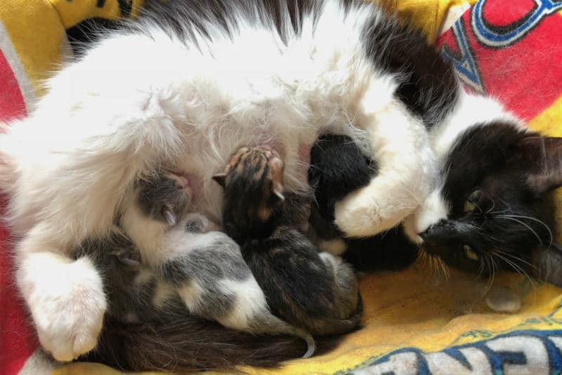 gatitos mamando