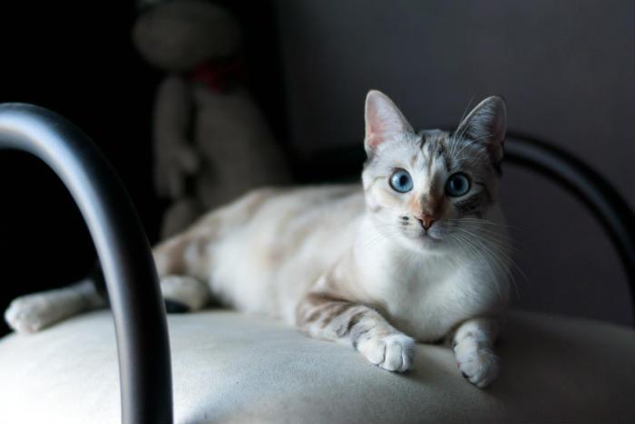 beneficios de salud gatos