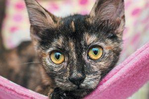 colores de gato