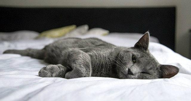 Como hacer que tu gato use su cama