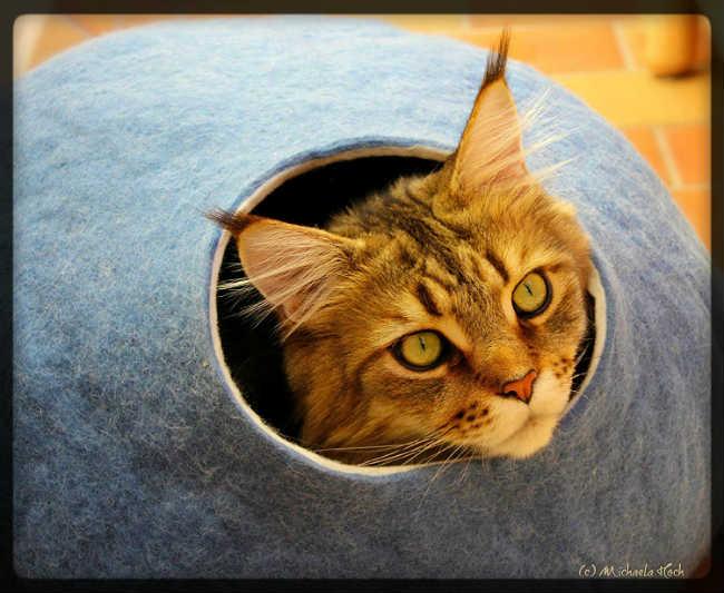 La mejor cama ecológica, hecha a mano para gatos