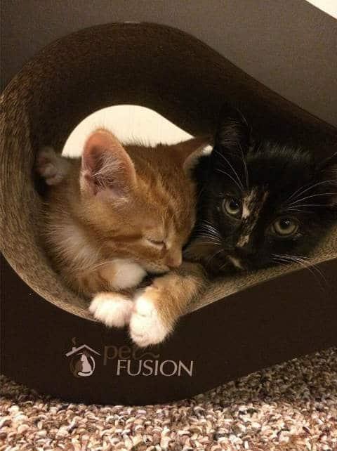 cama rascador para gatitos