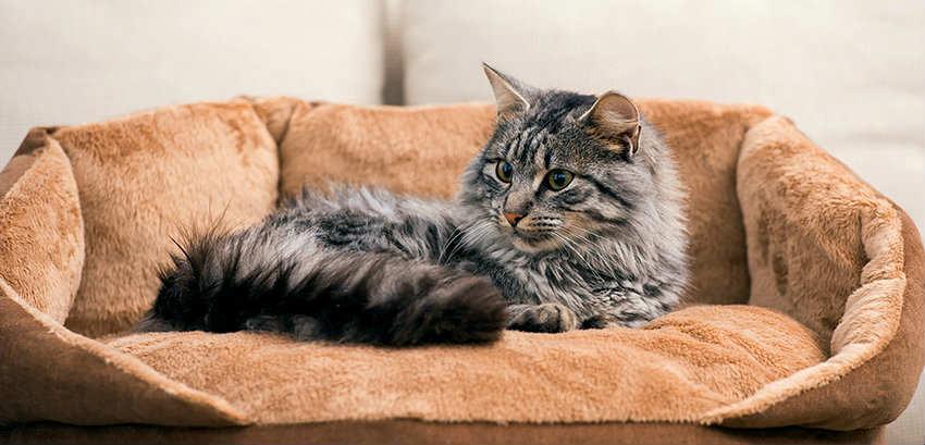 cama suave para gatos