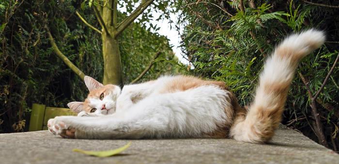 cola expresiva gato