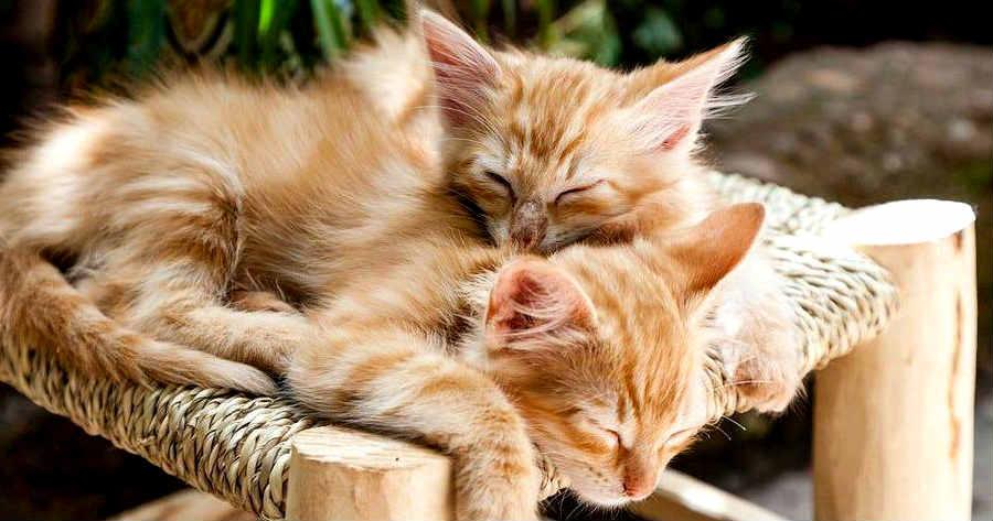gripe-en-gatos