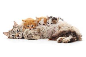 crecimiento en gatos