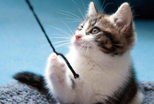 cuerda gato