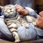 edad gato en años humanos
