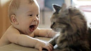 gatos y bebés: feliz convivencia