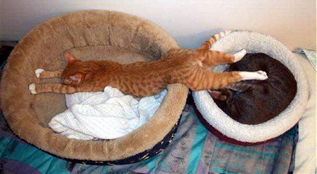 Camas para gatos ubicadas juntas