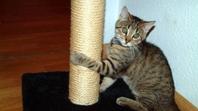 ¿Dónde coloco el rascador de mi gato?