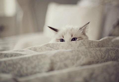 gatito acechando