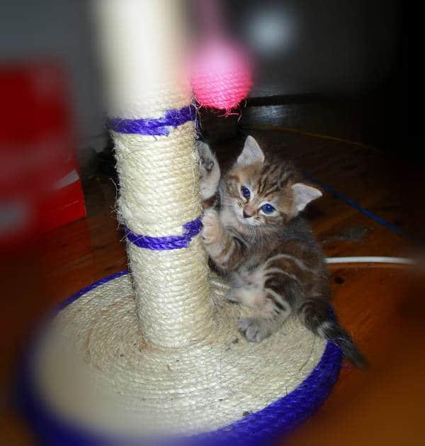 gatito pequeño usando el rascador