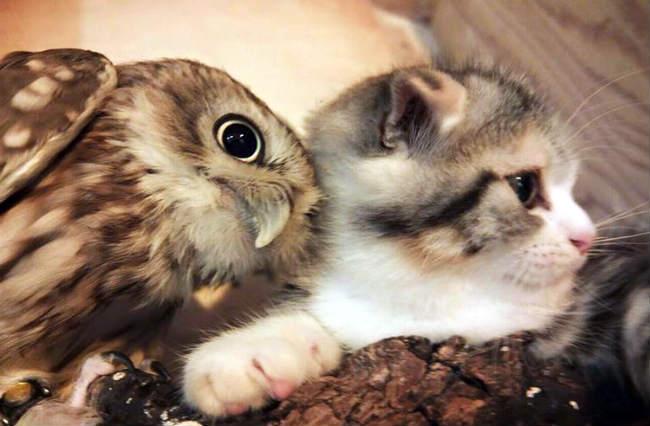 Los Búhos Atacan Y Se Comen A Los Gatos Paragatitos