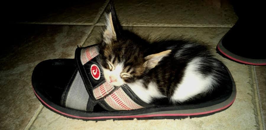 gatito durmiendo en una chancla