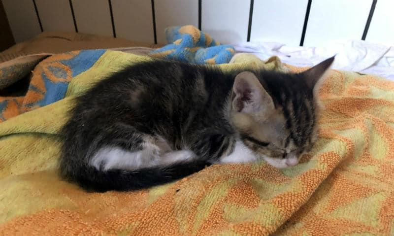 gatito durmiend plácidamente
