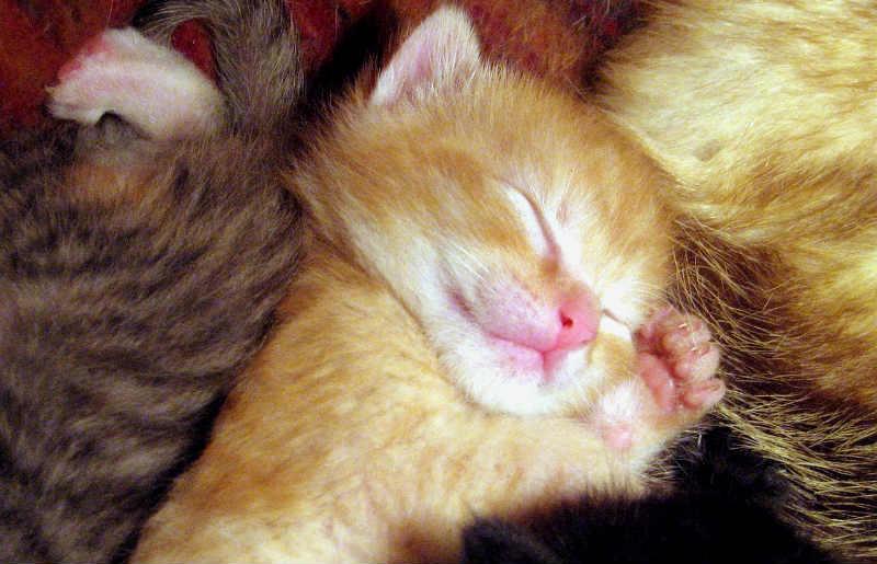 gatito-recién-nacido-durmiendo