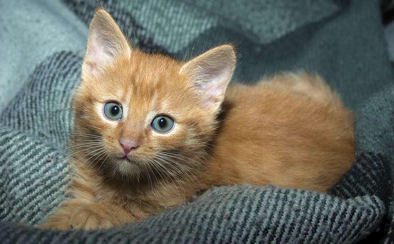 estrés-en-gatitos