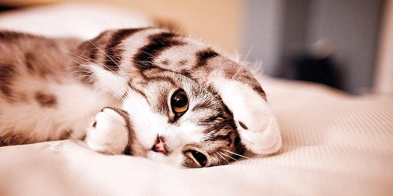 Deberia comprar una cama para mi gato?