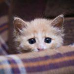 gatito-enfermo-gripe-felina