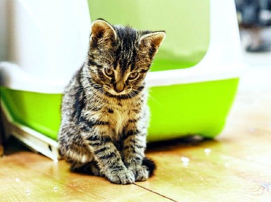 gatito-tímido-arenero