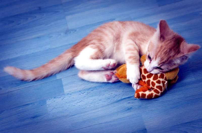 gatito-juguete