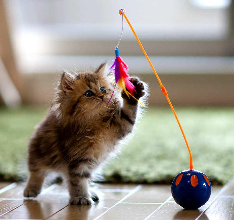 gatito jugando juguete
