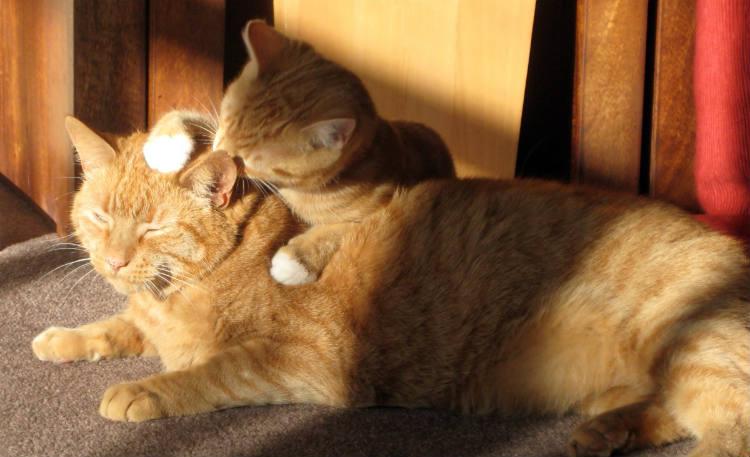 gatito lamiendo a su mama