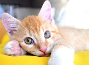 gatito-mirándote-amor