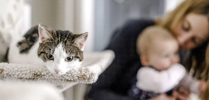 Ignorar al gato cuando tienes un bebé