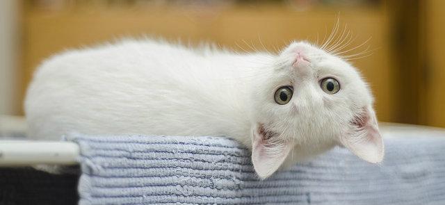 un nuevo gatito en tu hogar