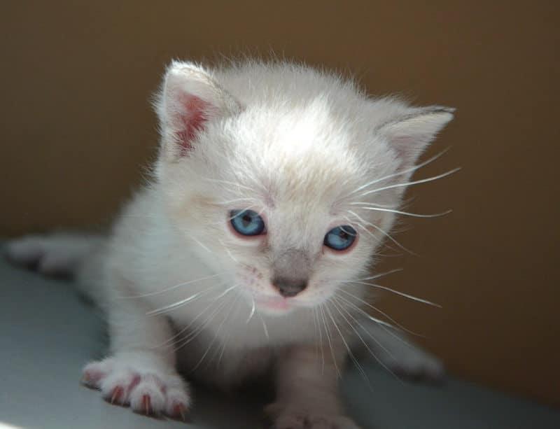 cuando-abren-los-ojos-los-gatitos