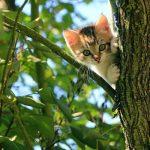 gatito feliz en verano