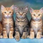gatitos buenos para la salud