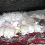 gatitos recién nacidos, camada