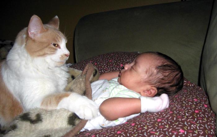gatitos y bebés