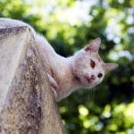 ¿Por qué a los gatos les gustan las alturas?