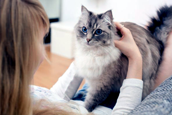 gato-amasando-amor