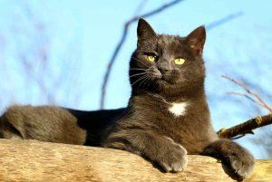cuidar-gato-anciano